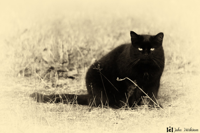the_eyes_of_disturbed_black_cat_by_huicca-d5hvs2f